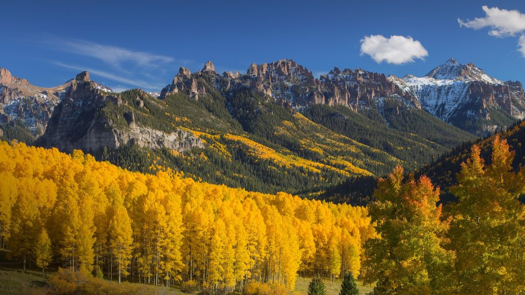 Fall Color aspens in the Rocky Mountains, Colorado, USA