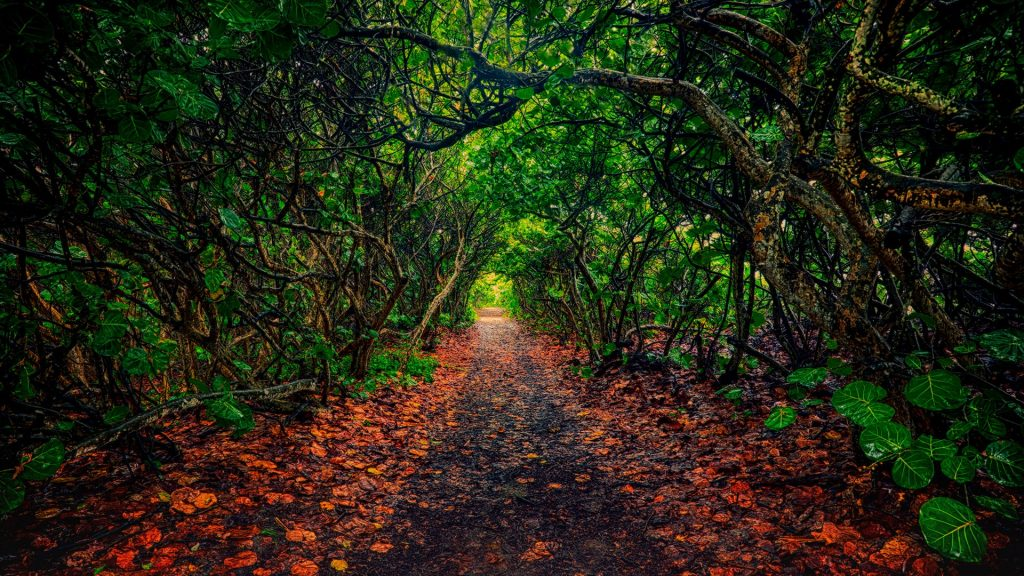 Trail through forest, Jupiter, Florida, USA