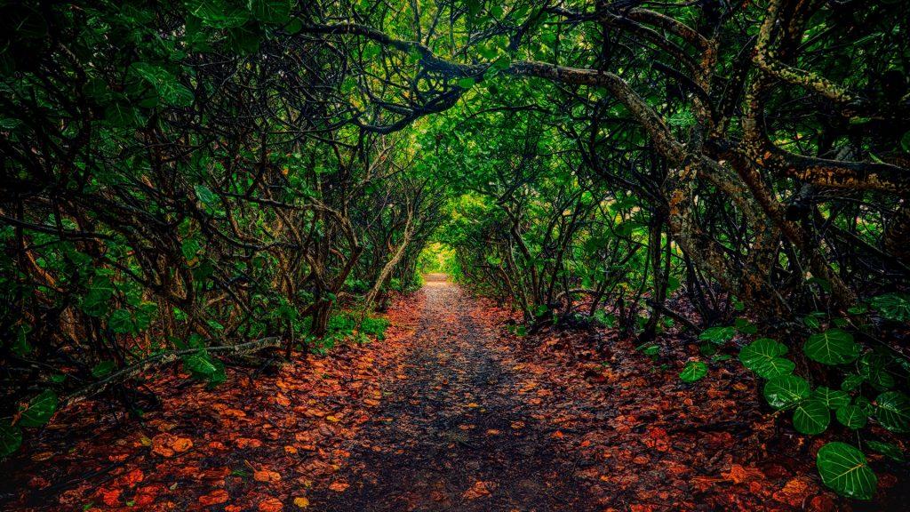 Trail through forest, Jupiter, Florida, USA