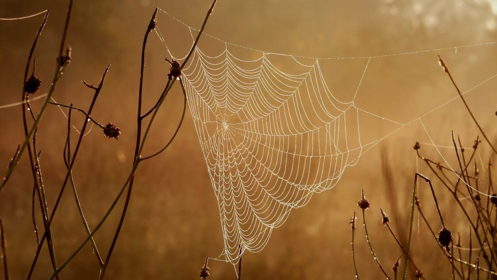 Spider web on a meadow in the rays of the rising sun, Poland