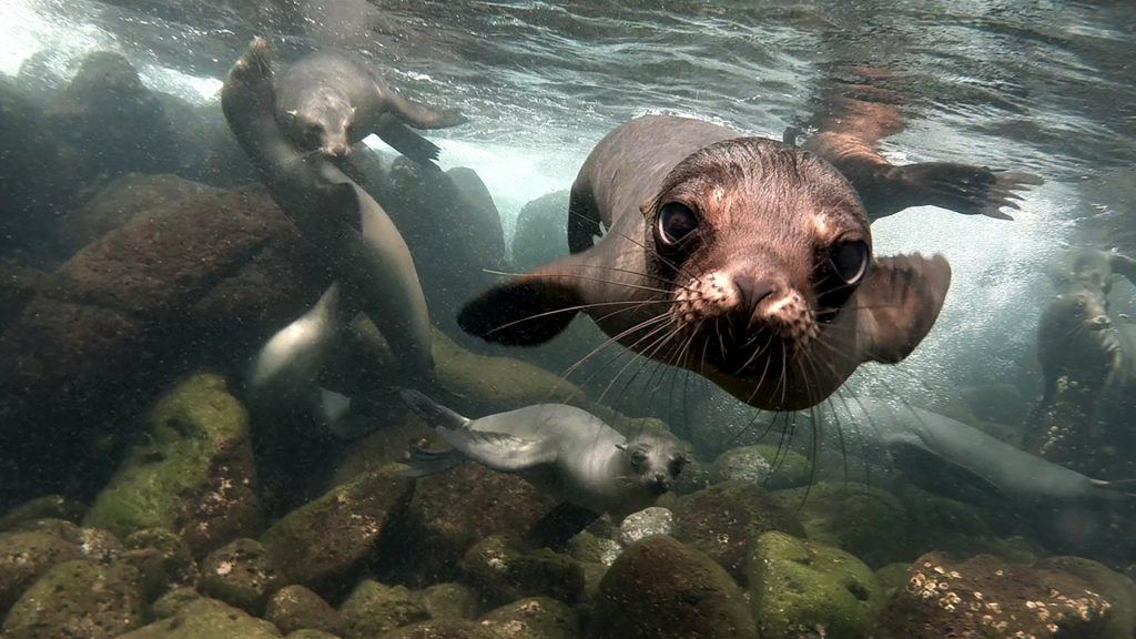 Close encounter, sea lions at Galápagos Islands, Ecuador