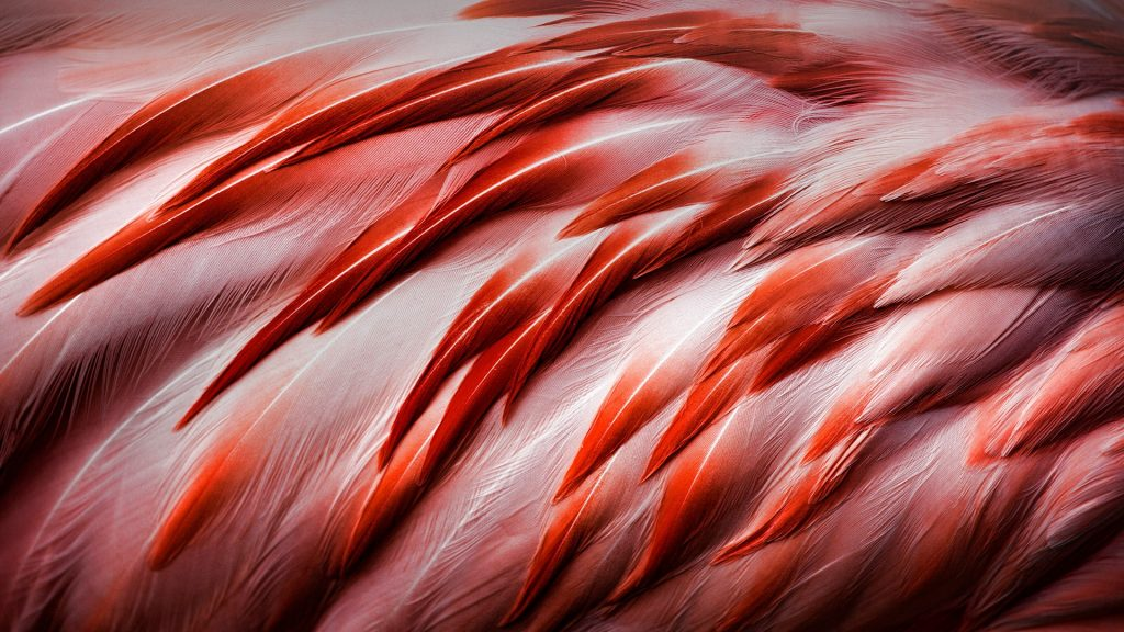 Bright pink flamingo feathers