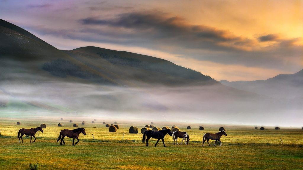 Horses at dawn, Castelluccio of Norcia, Umbria, Apennines, Italy