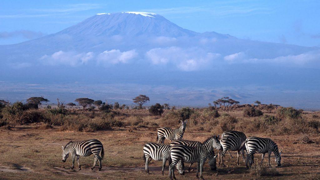Kilimanjaro with Plains Zebra, Amboseli National Park, Kenya