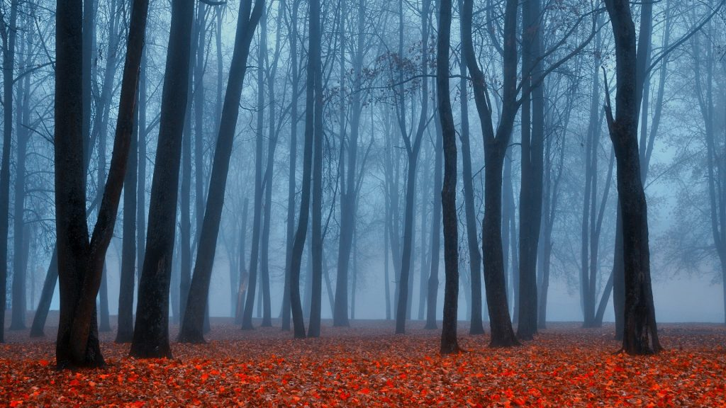 Autumn park landscape in foggy weather, Russia