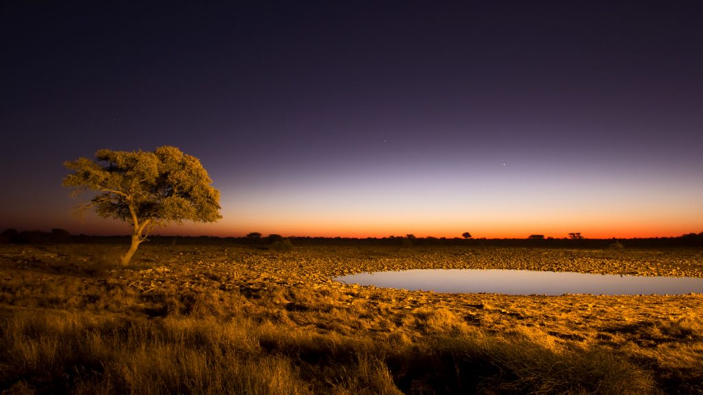 african twilight  classic landscape of lone acacia tree
