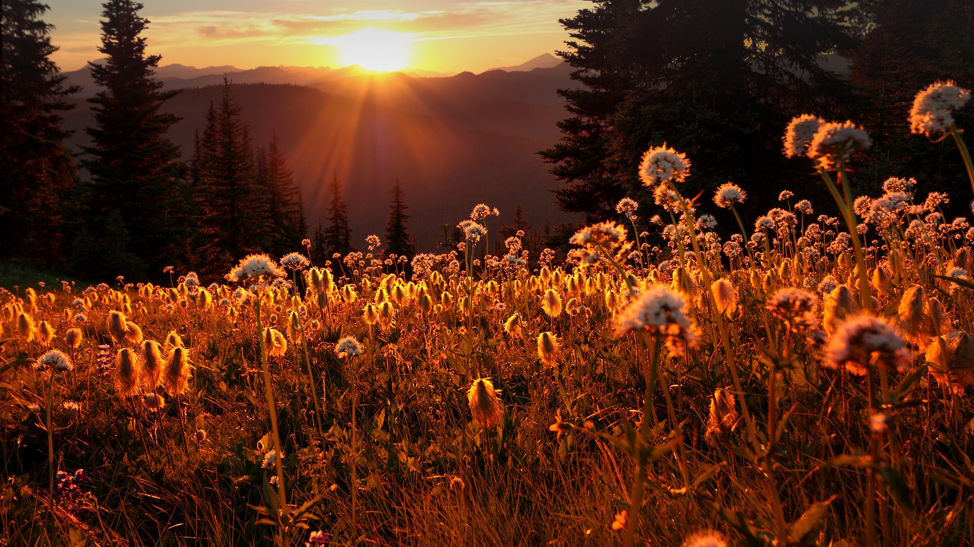 E.C. Manning Provincial Park, sunset from Paintbrush Trail ...