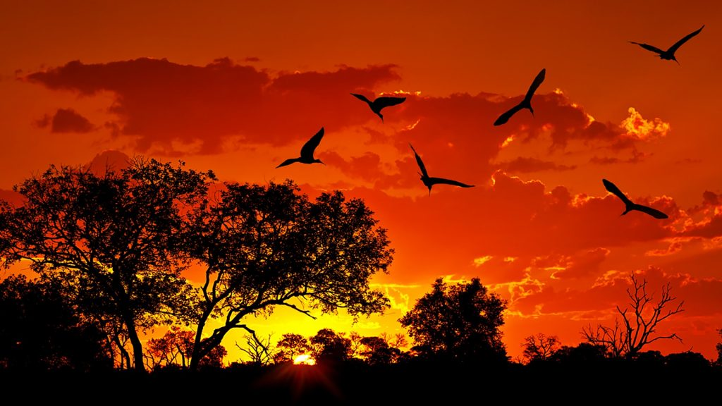 Landscape of South Africa with warm sunset, Kruger National Park