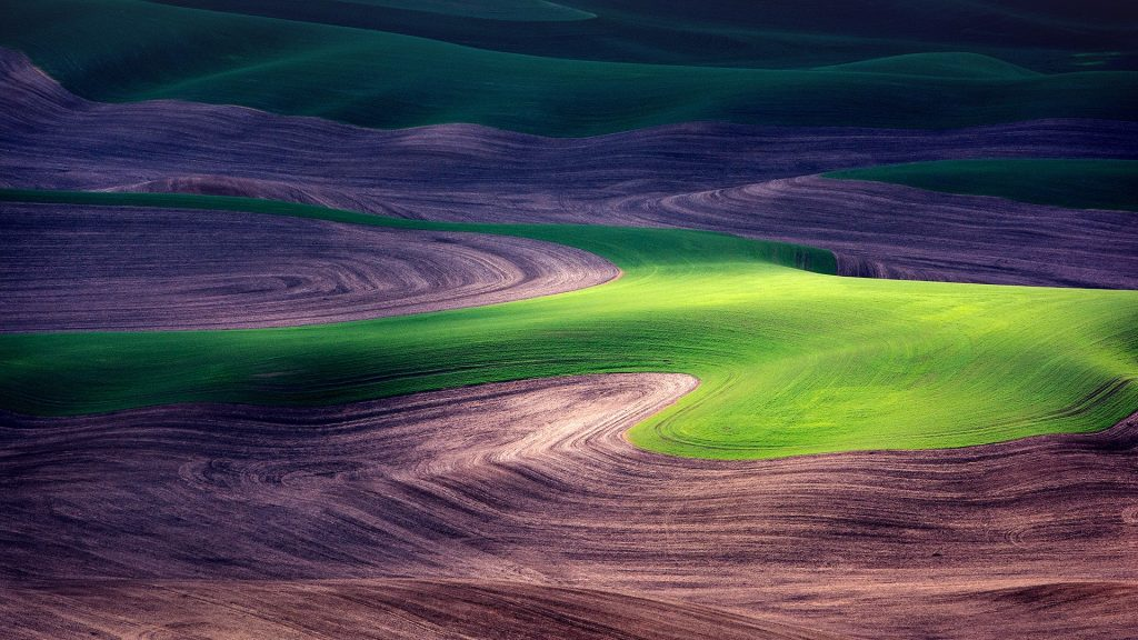 Colorful fields, Palouse, Washington, USA
