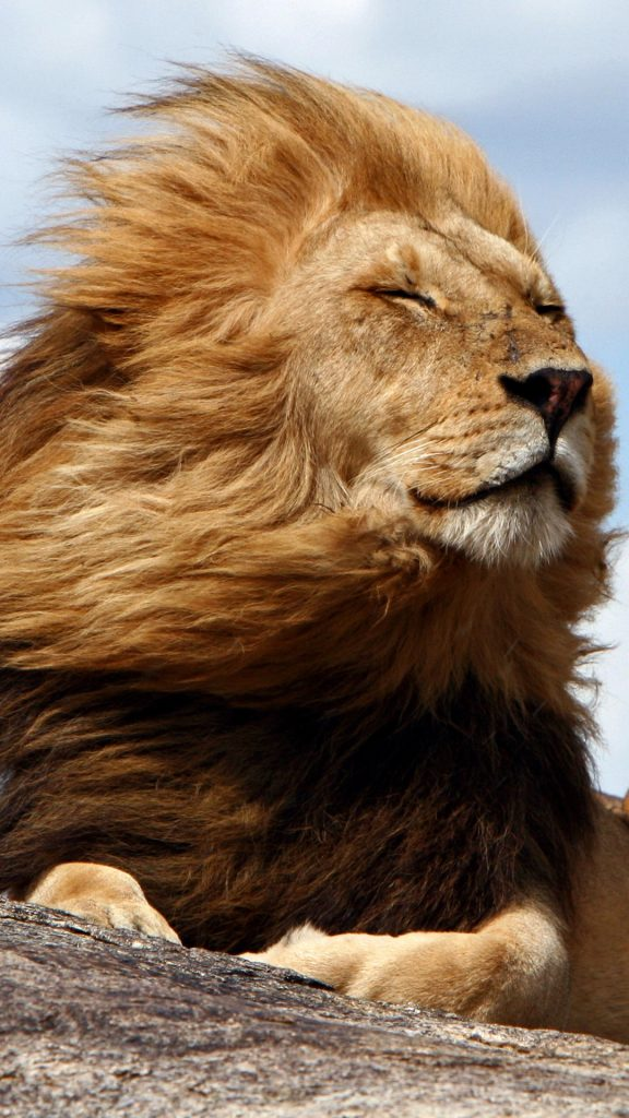 Serengeti National Park >> King of the Serengeti, Tanzania | Windows 10 SpotLight Images