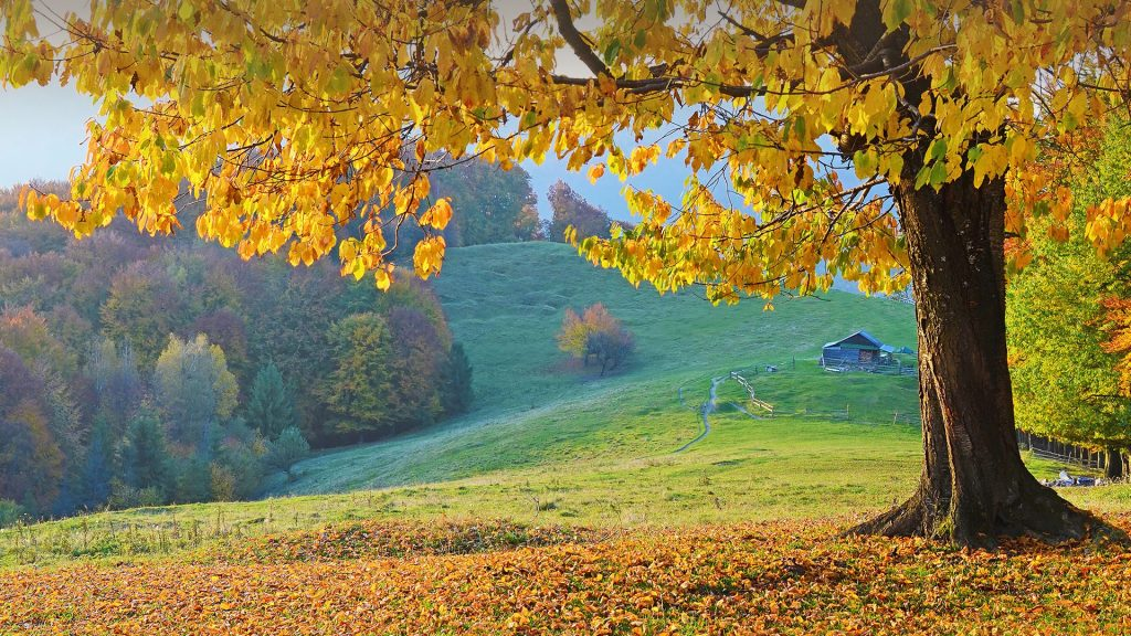 Beautiful landscape with magic autumn trees and fallen leaves in the mountains