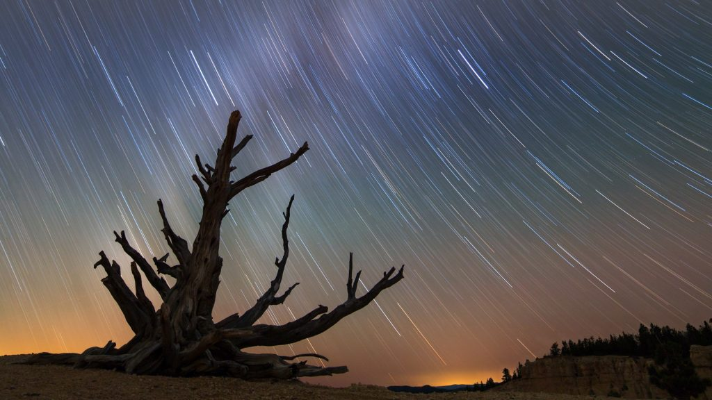 Milky Way star trails behind old bristlecone pine, Bryce Canyon National Park, Utah, USA