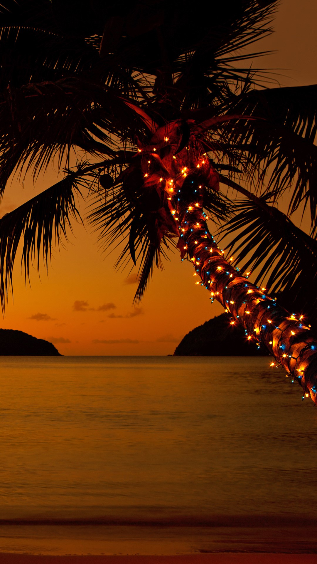Christmas lights on a palm tree at the Caribbean beach at ...