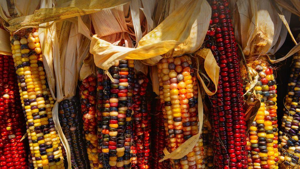Seasonal indian corn, New York City, USA