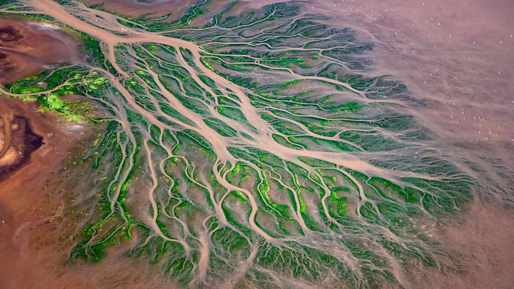 Aerial view of Ewaso Ng'iro River delta patterns with Lesser Flamingos (Phoeniconaias), Lake Natron, Kenya
