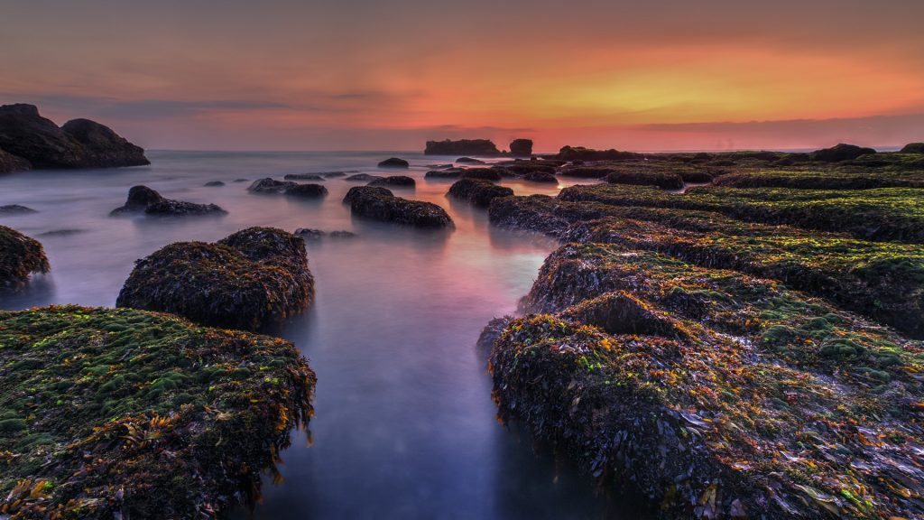 Moss on the rock at Nyanyi Beach at low tide, Bali, Indonesia