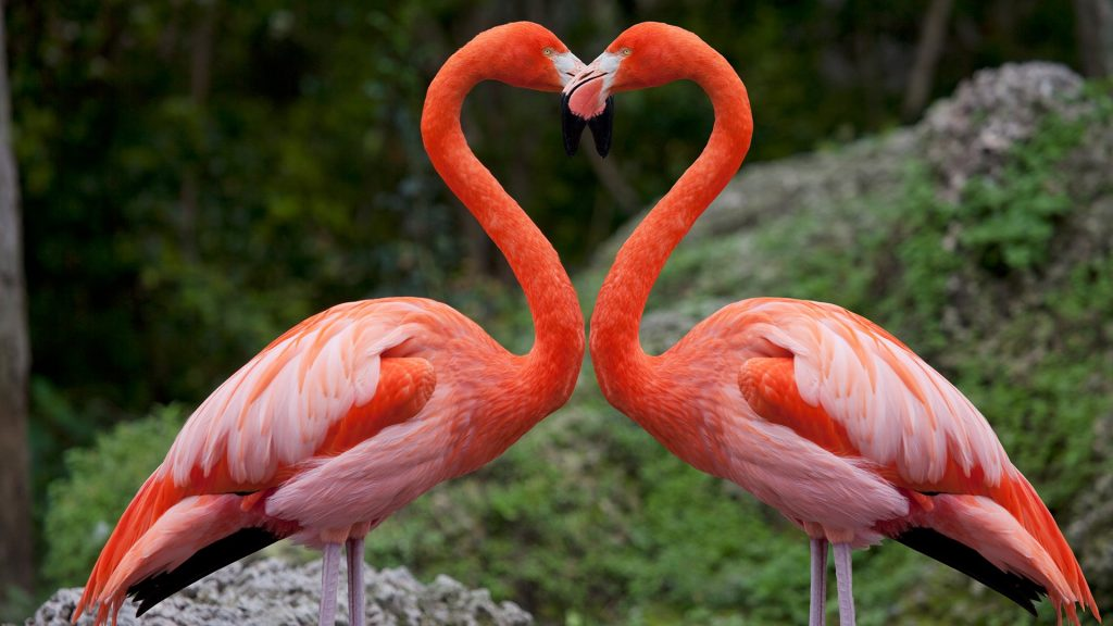 Pink flamingos with heart shaped necks, Miami, Florida, USA