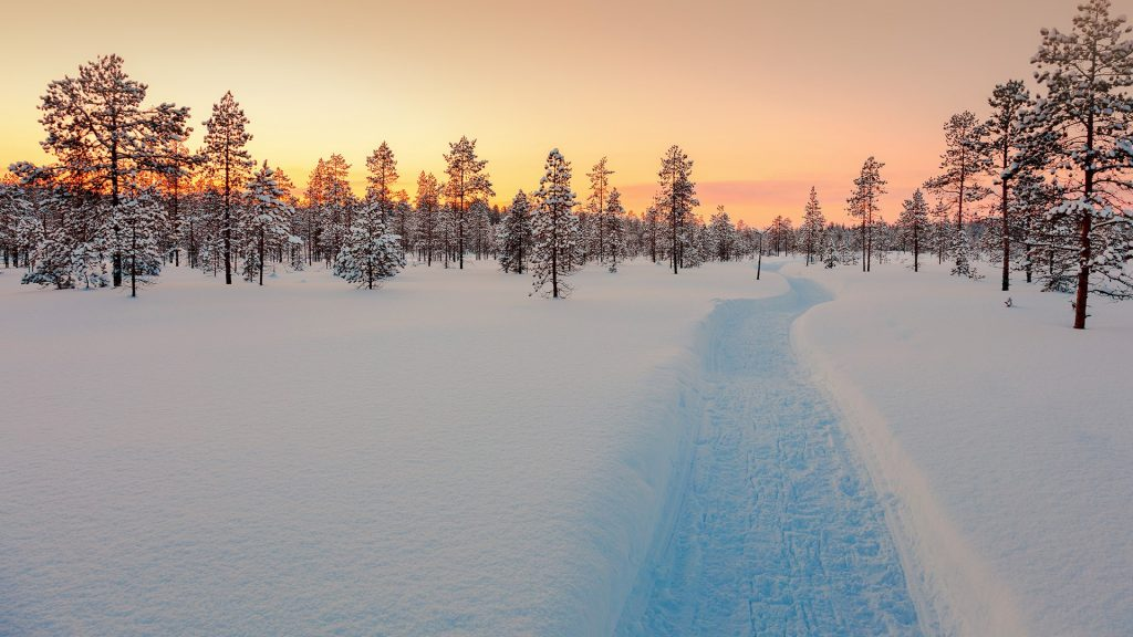 Sundown in winter snowy forest, Lapland, Finland
