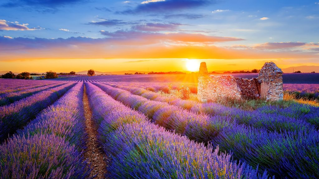 Setting sun over lavender filed in Valensole, Provence, France
