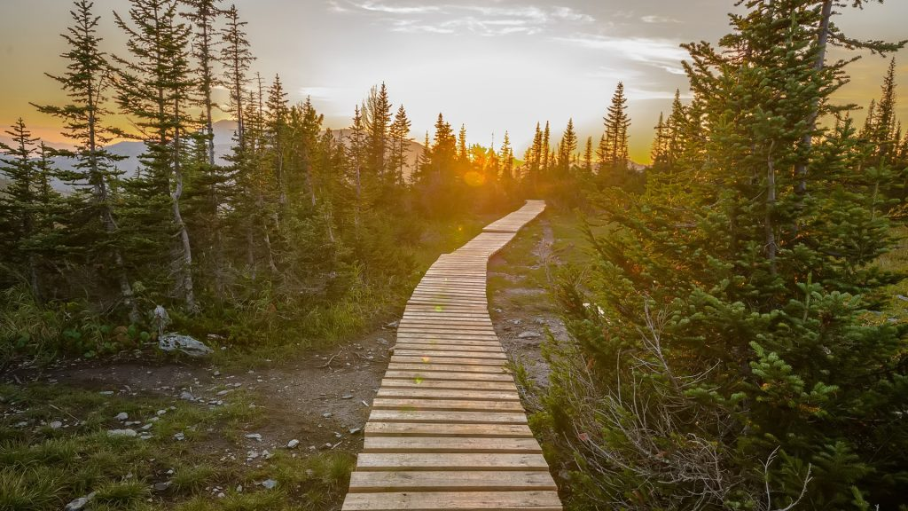 Wooden pathway in green mountain forest