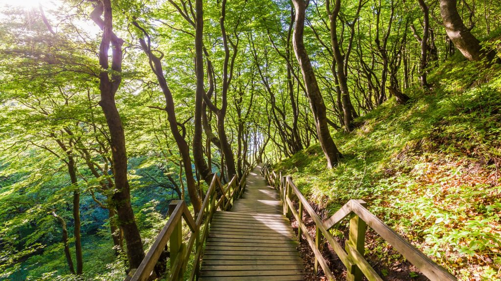 Wooden path in forest, Mons Klint, Mon Island, Denmark
