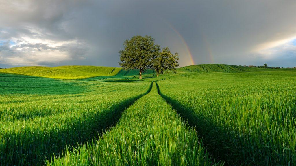 Rainbow over a green field, Poland