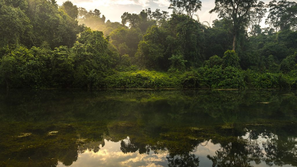 Perfect reflection of forest scene at Macritchie Reservoir rainforest, Singapore