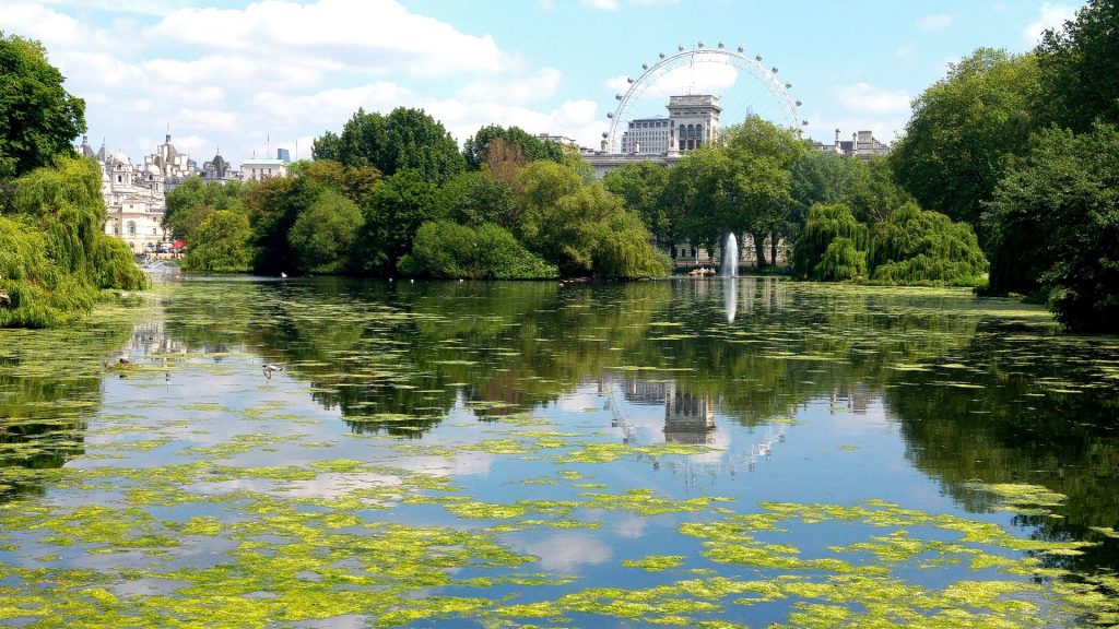 Reflection of trees in lake, public park in London, England, UK