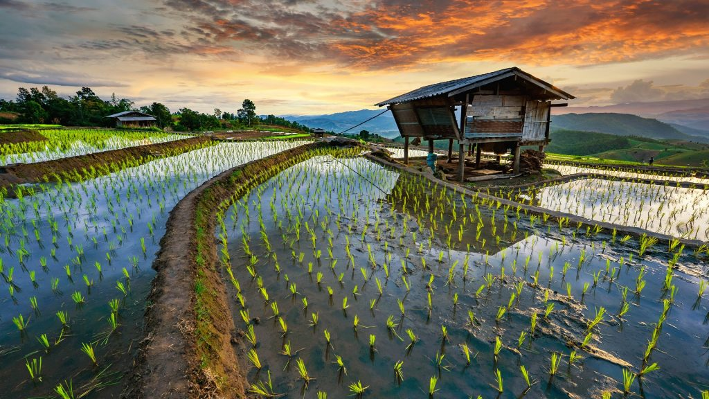 Rice terrace field, Pa-pong-peang, Chiang Mai, Thailand