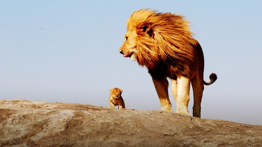 Lion and cub on rock against sky