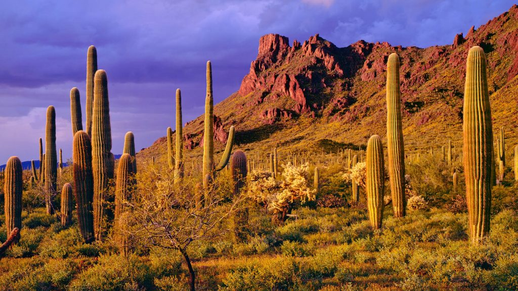 Spring storm at Ajo Mountains in Organ Pipe Cactus National Monument, Arizona, USA