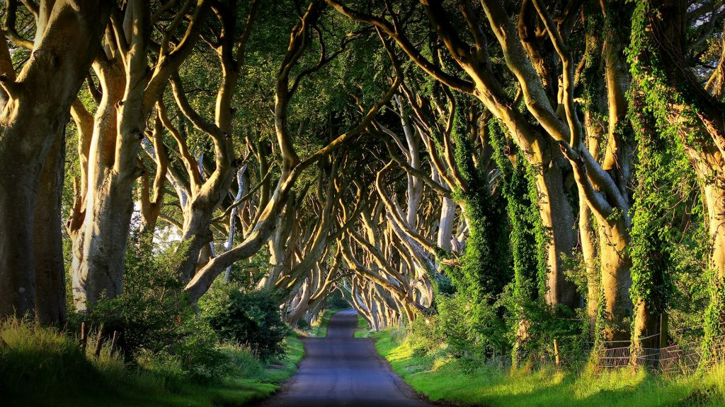 Dark Hedges avenue on Bregagh Road at sunset, County Antrim, Northern Ireland, UK