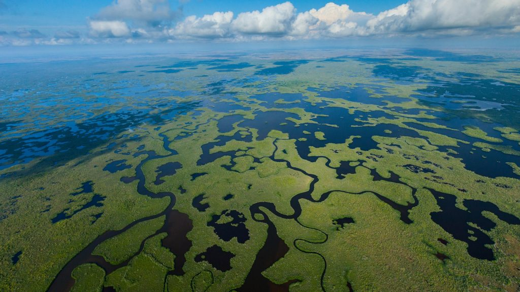 Wetland aerial view in Everglades National Park, Florida, USA