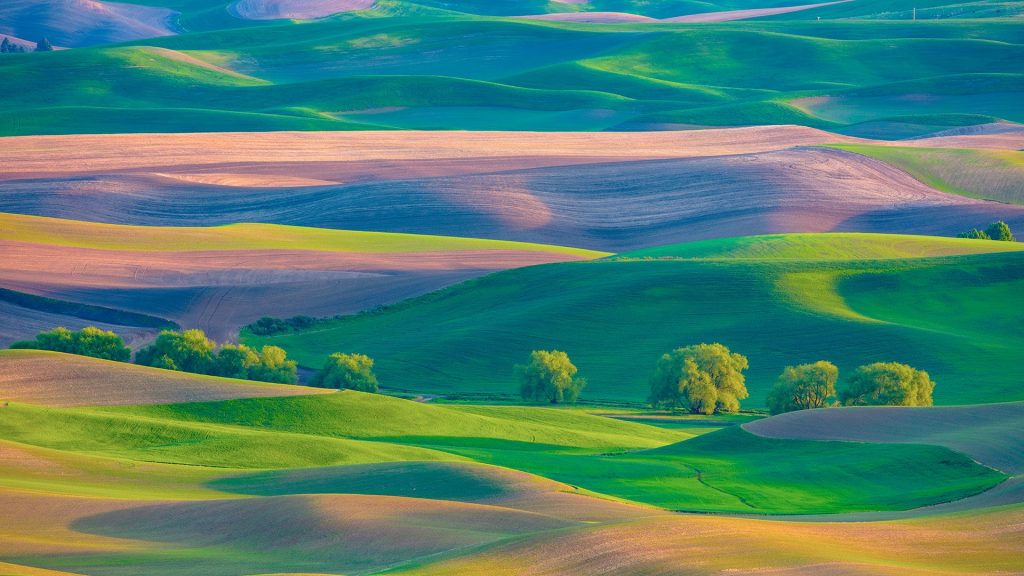 Farmland in Palouse region of Washington State from Steptoe Butte in spring, USA