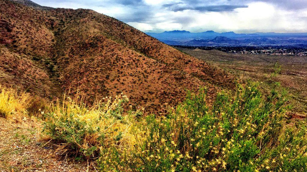 Franklin Mountains view with yellow wild flowers, El Paso, Texas, USA