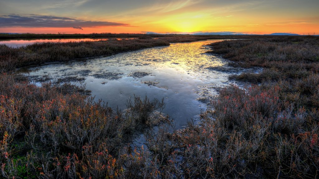 Fire Marsh, sunset over swamp, Vallejo, California, USA