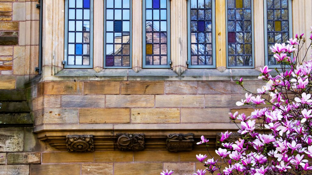 Yale University Victorian windows reflection, magnolia in spring, New Haven, Connecticut, USA