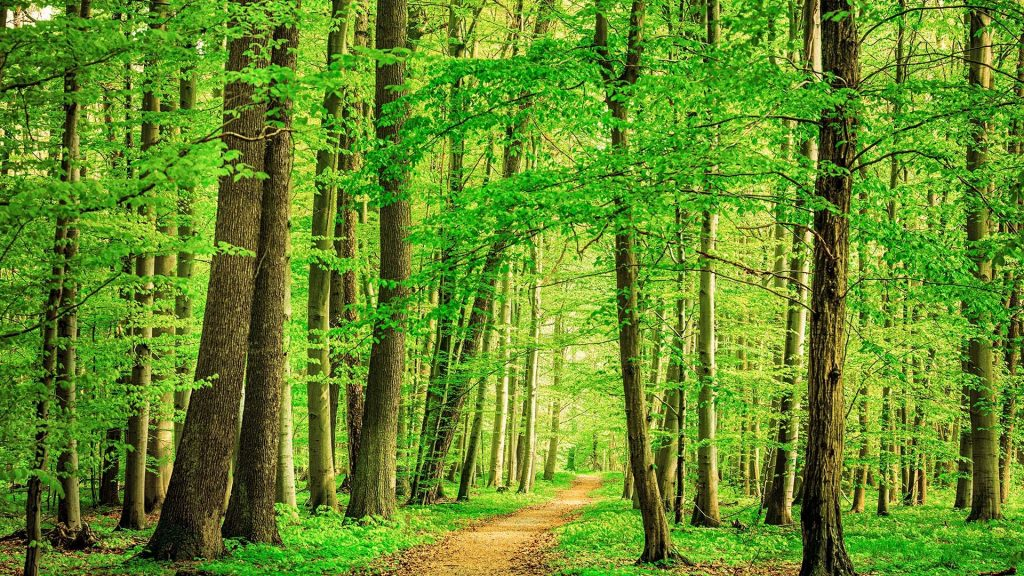 Path through beech tree forest, Thuringia, Germany
