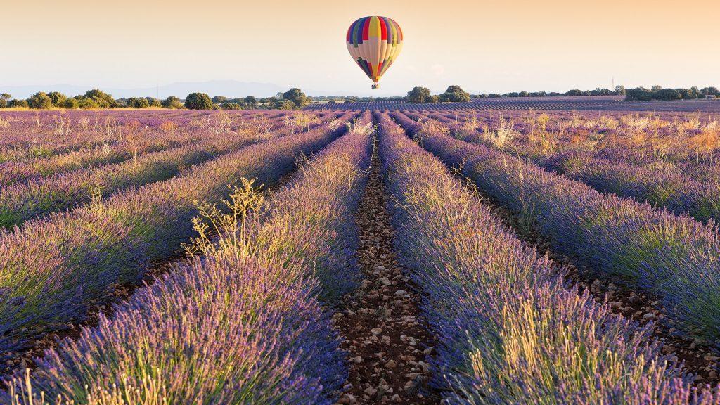 Balloon over Lavender plantation, Brihuega, Guadalajara province, Castilla La Mancha, Spain