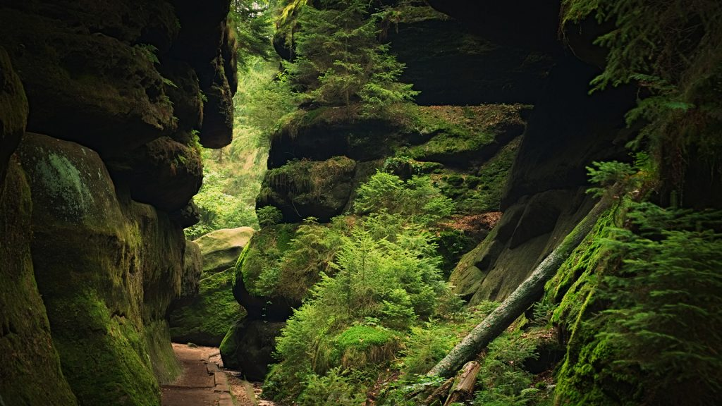Path through a gorge with rocks and trees, Saxon Switzerland, Germany