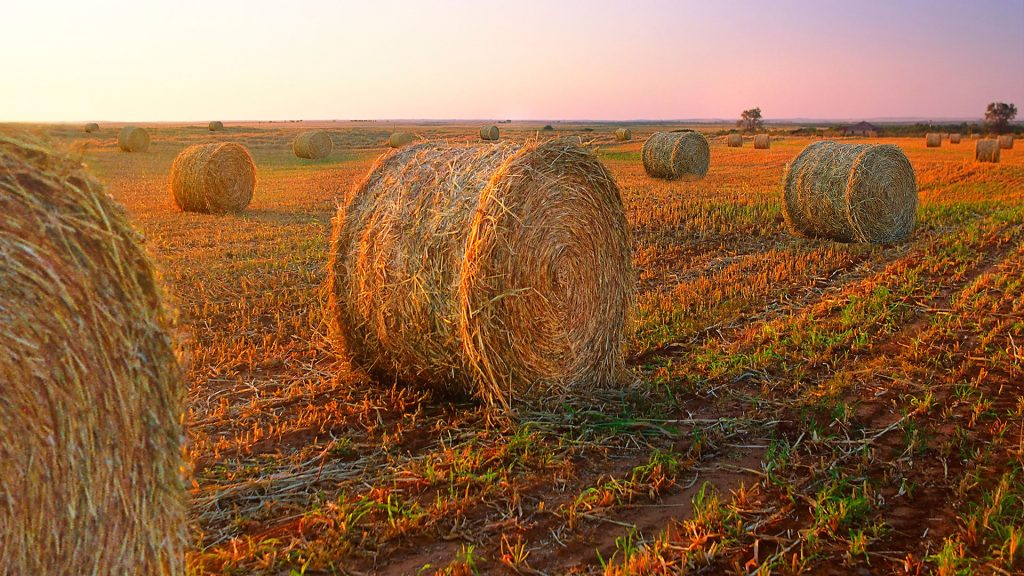 Bales of hay in the Texas countryside during sunset, USA