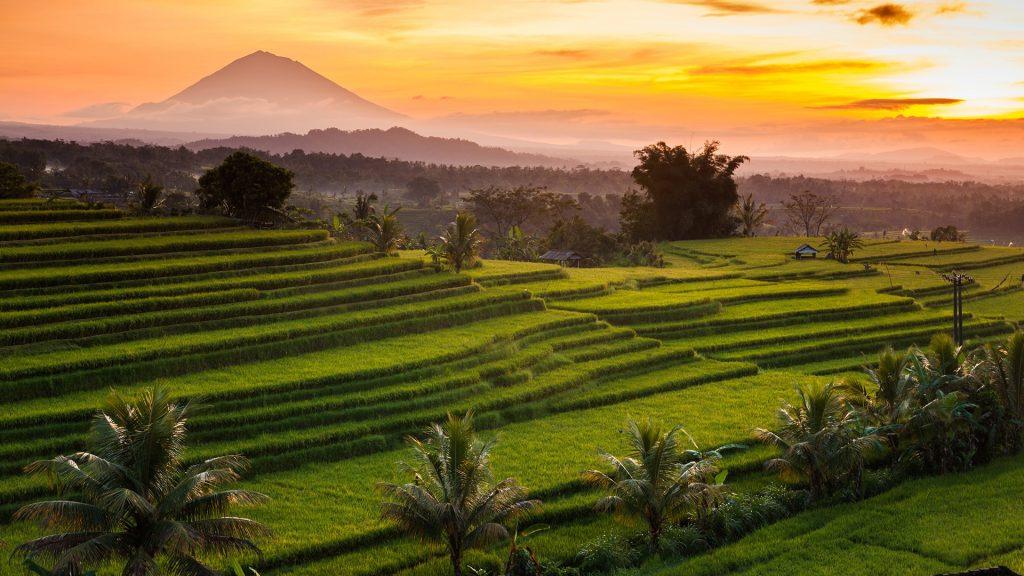 Jatiluwih rice terraces at sunrise, Bali, Indonesia