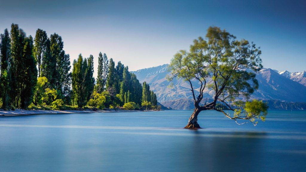 The famous Wanaka Tree at Lake Wanaka, Otago, New Zealand