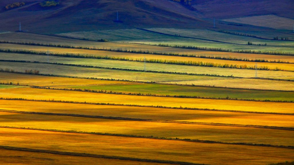 Colorful prairie, Hulunbuir grasslands, Inner Mongolia, China