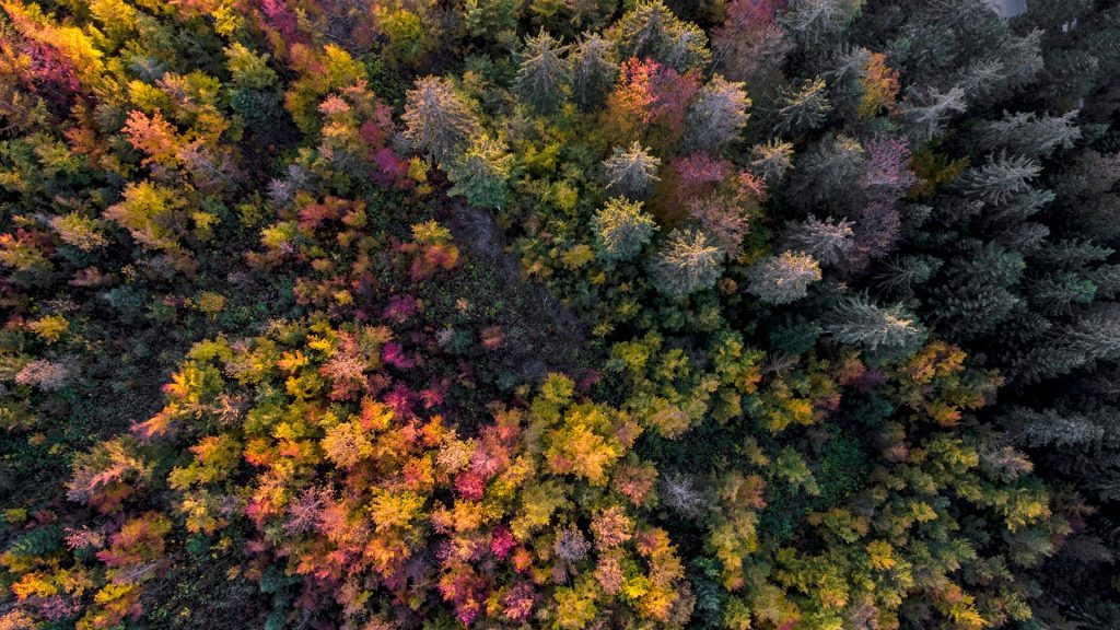 Aerial view of a forest in autumn, Gingins, Vaud Canton, Switzerland