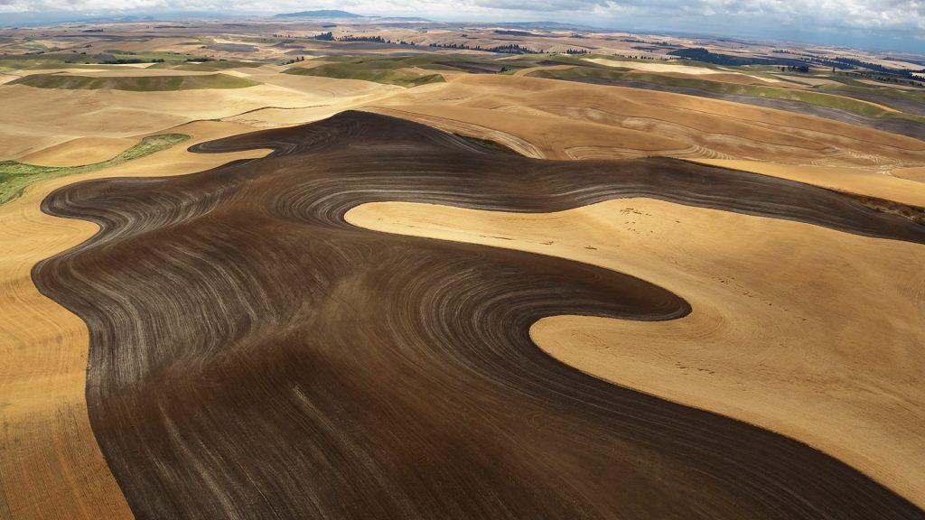 Wheat field during harvest time, Palouse hills, Washington State, USA