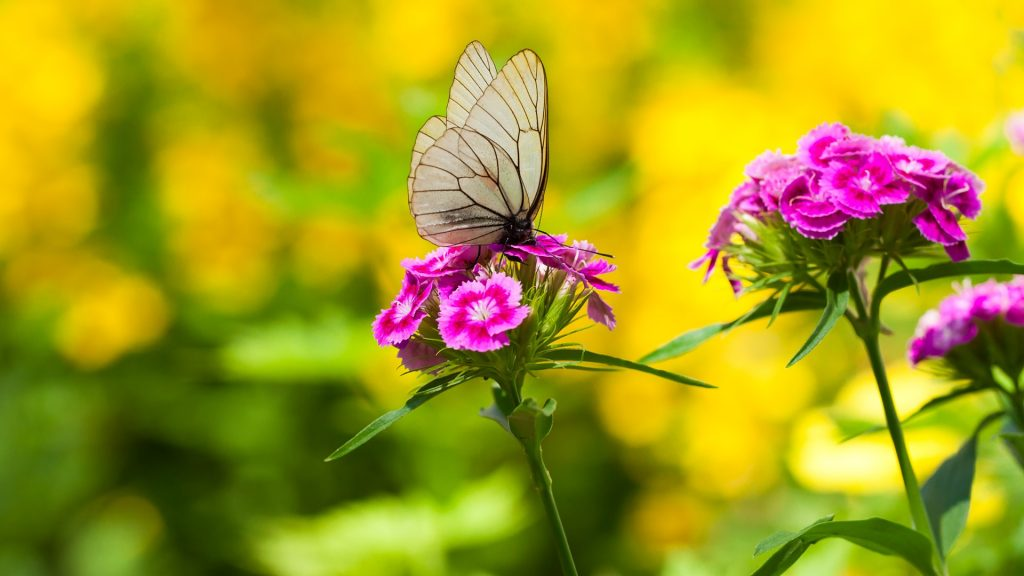 Beautiful white butterfly sits on flowers
