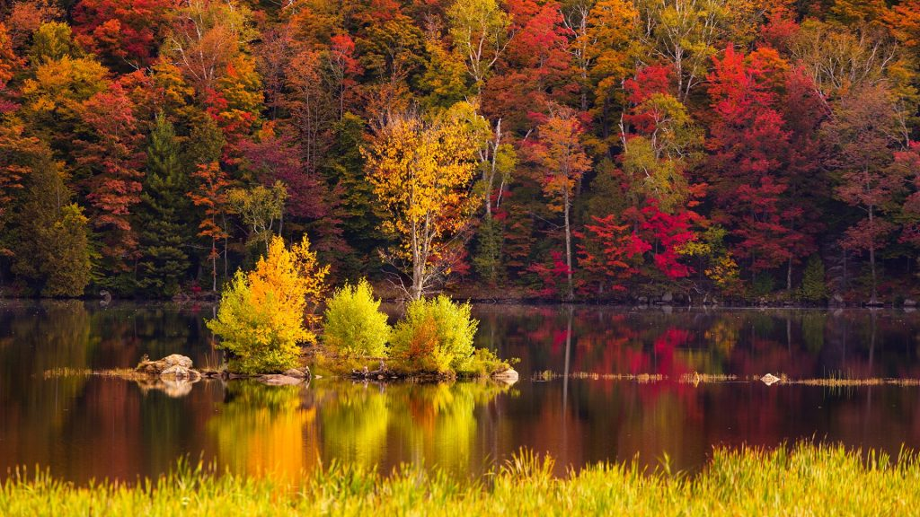 Peak New England foliage around Kent Pond in Killington, Rutland County, Vermont, USA