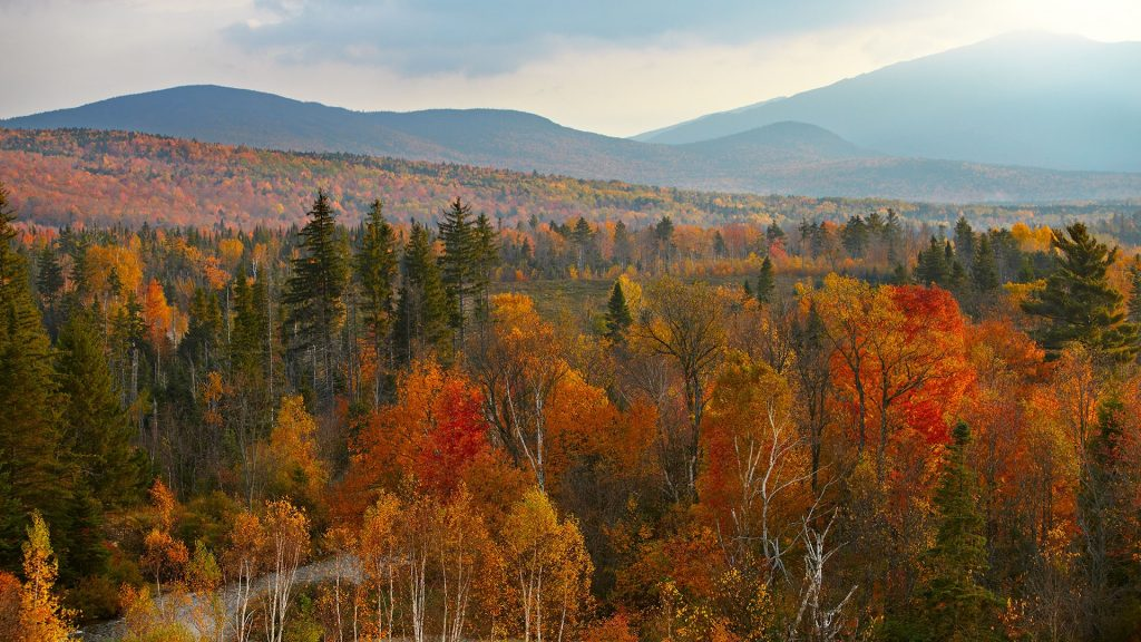 Fall trees with misty mountain and river, New Hampshire, USA