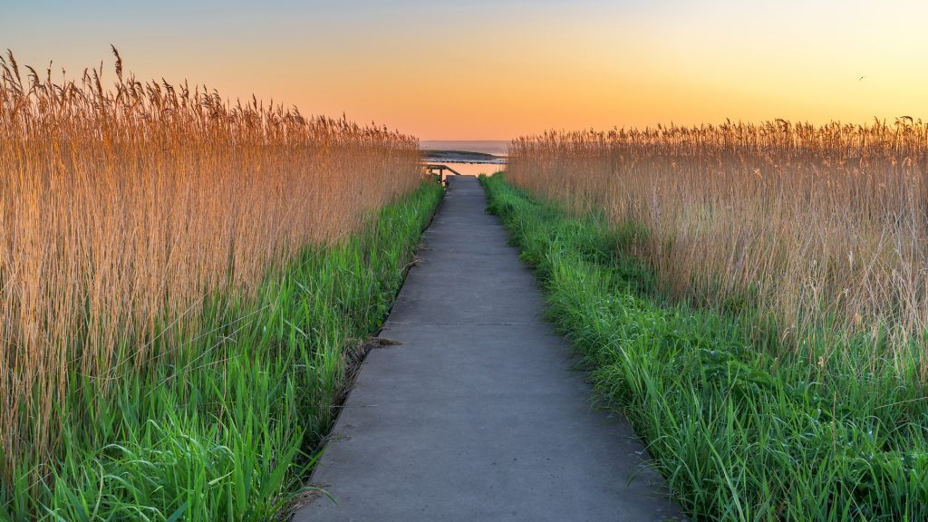 Path through reed beds on an early morning at sunrise, Utvälinge, Sweden